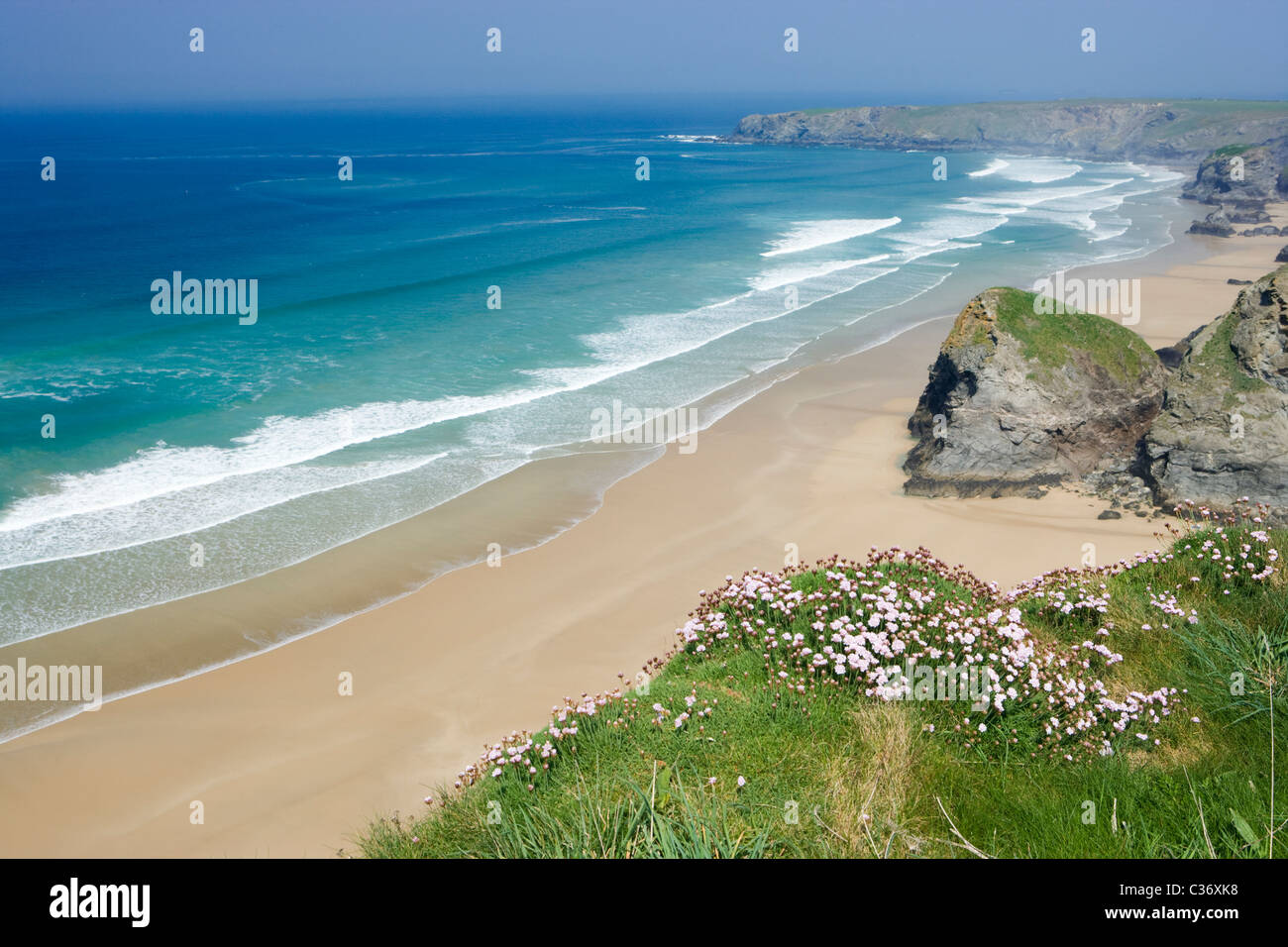 Whitestone Cove and Bedruthan Steps, Cornwall, UK. Thrift in foreground. - Stock Image