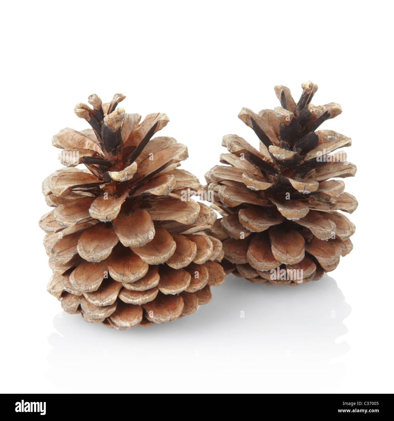 Pine cones - Stock Image