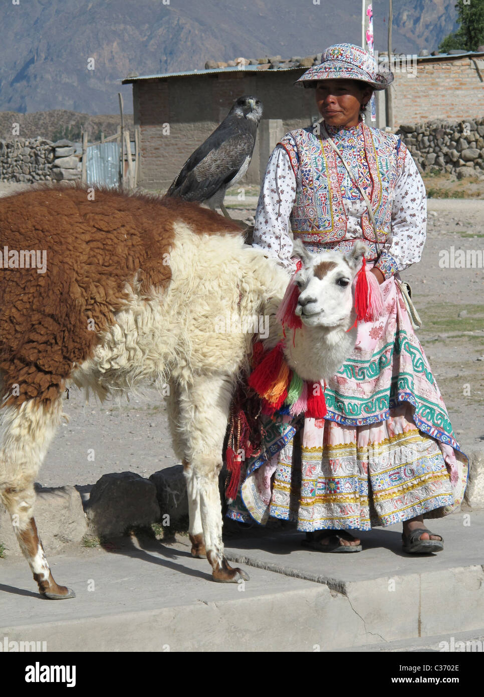 Andean woman in traje tipico de Arequipa with young eagle and lama Stock Photo