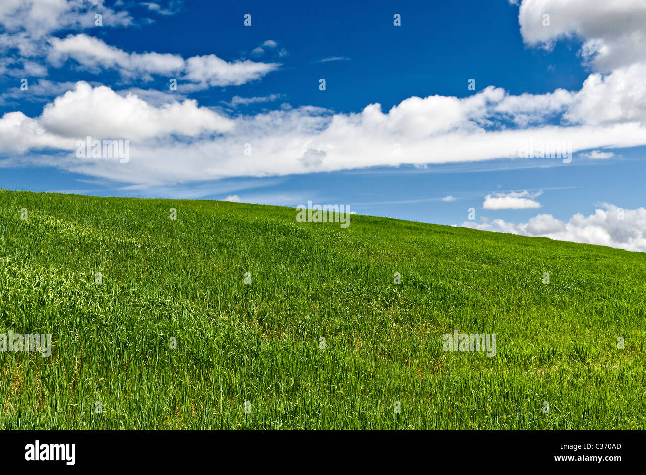 Green field with blue sky and clouds in the background - Stock Image