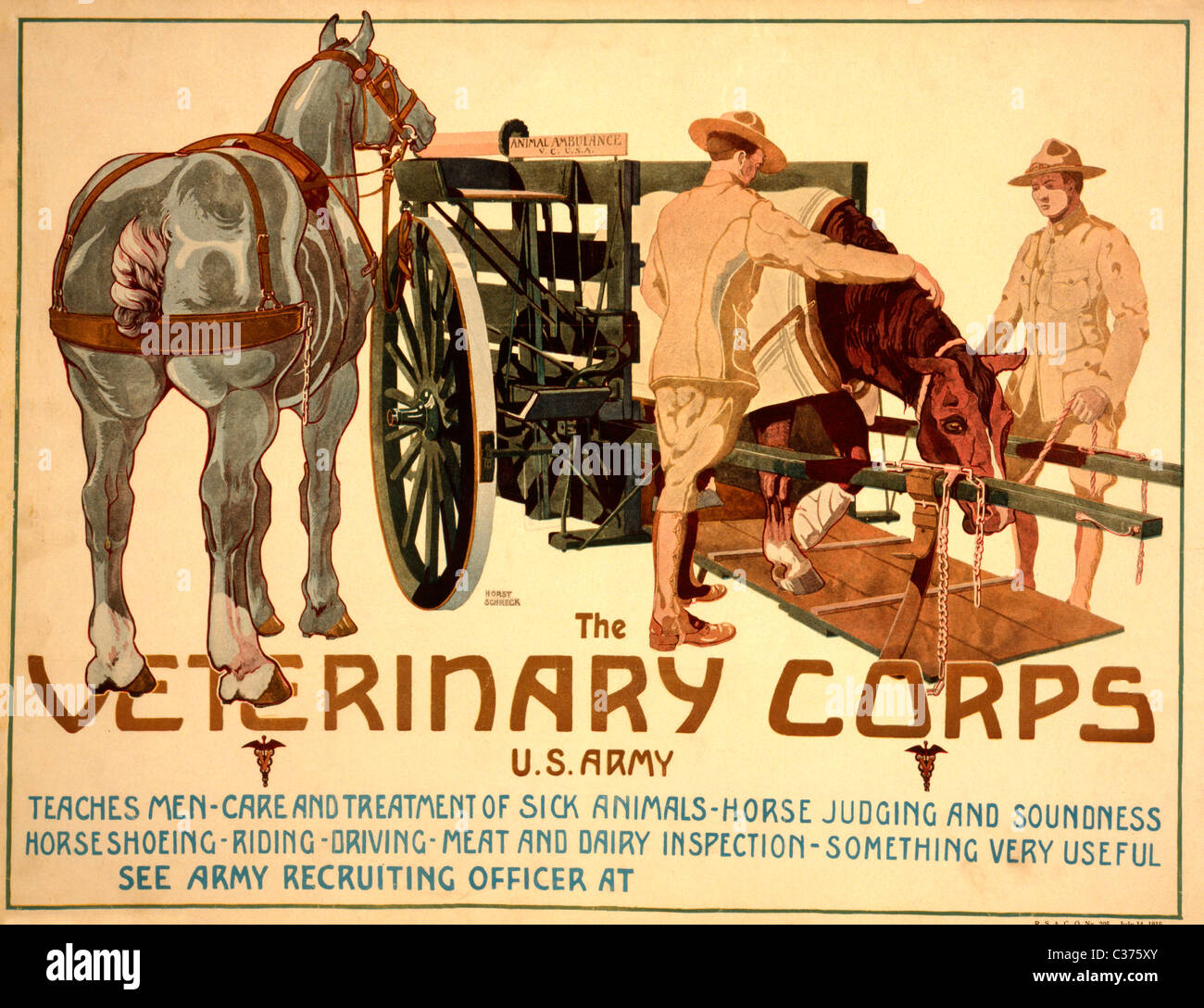 The Veterinary Corps, U.S. Army Recruiting Poster 1919 - Stock Image