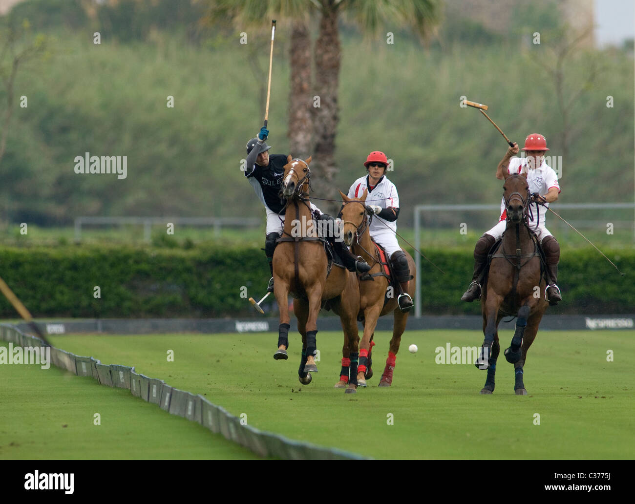 Polo players in action during match - Stock Image