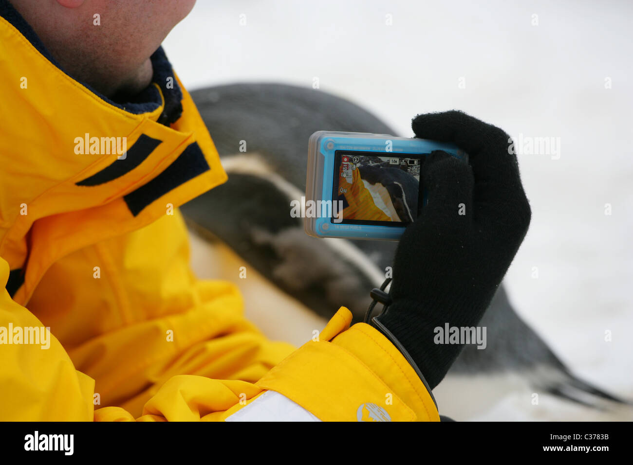 Ecotourist taking photograph of Gentoo penguin with image visible on viewing screen of digital compact camera - Stock Image