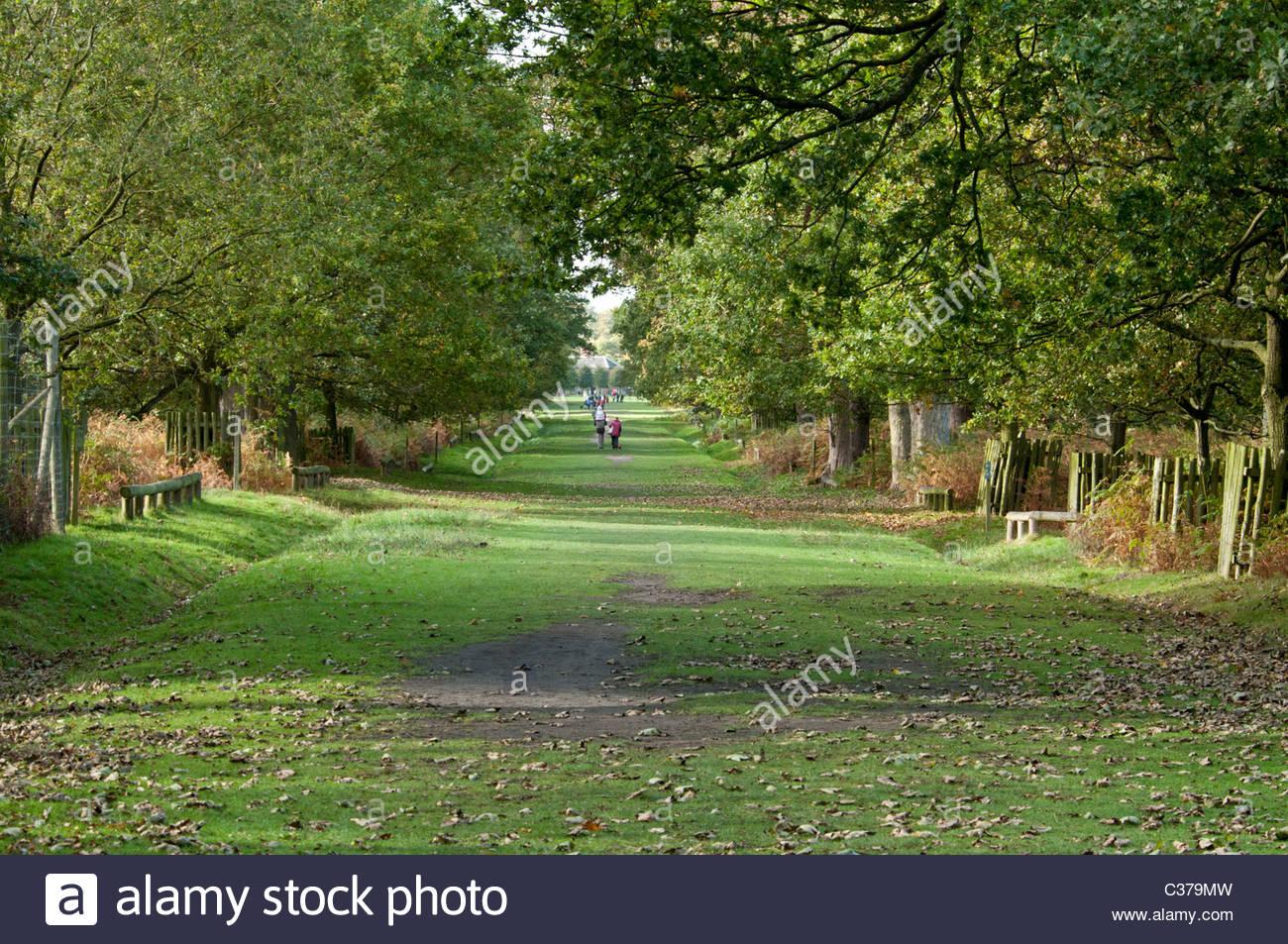 Tree lined drive on Dunham Massey estate. - Stock Image