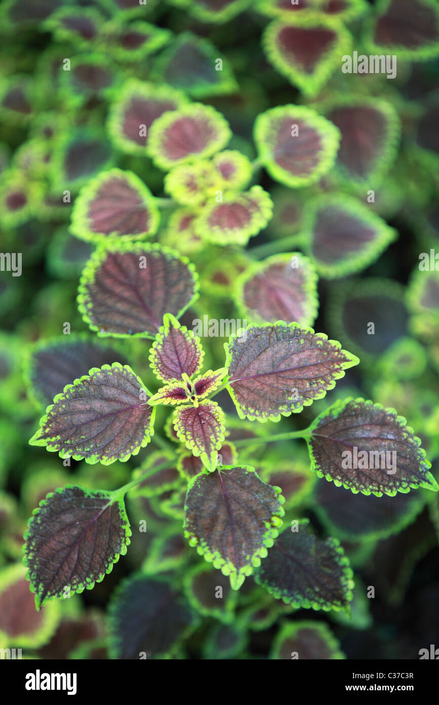 Beautiful Plants In Sri Lanka Asia Stock Photo 36427883 Alamy