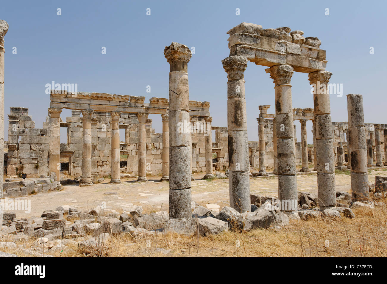 Classically inspired section of the monumental Colonnaded Street of the ancient city of Apamea. - Stock Image