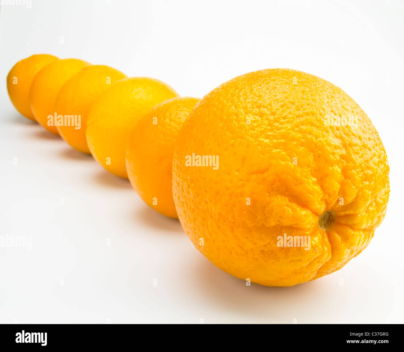 oranges in line isolated on a white background - Stock Image