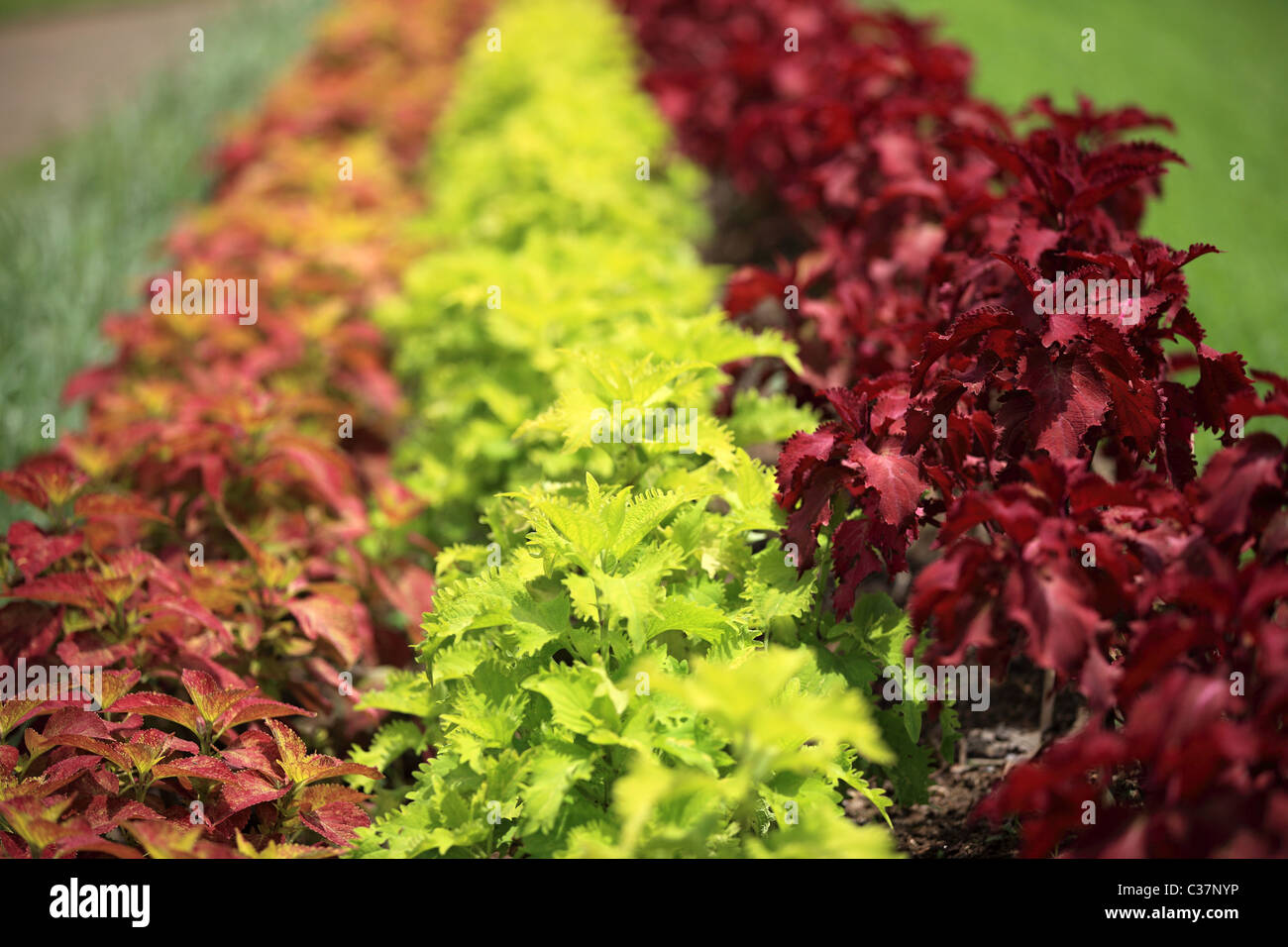 Beautiful Plants In Sri Lanka Asia Stock Photo 36435610 Alamy