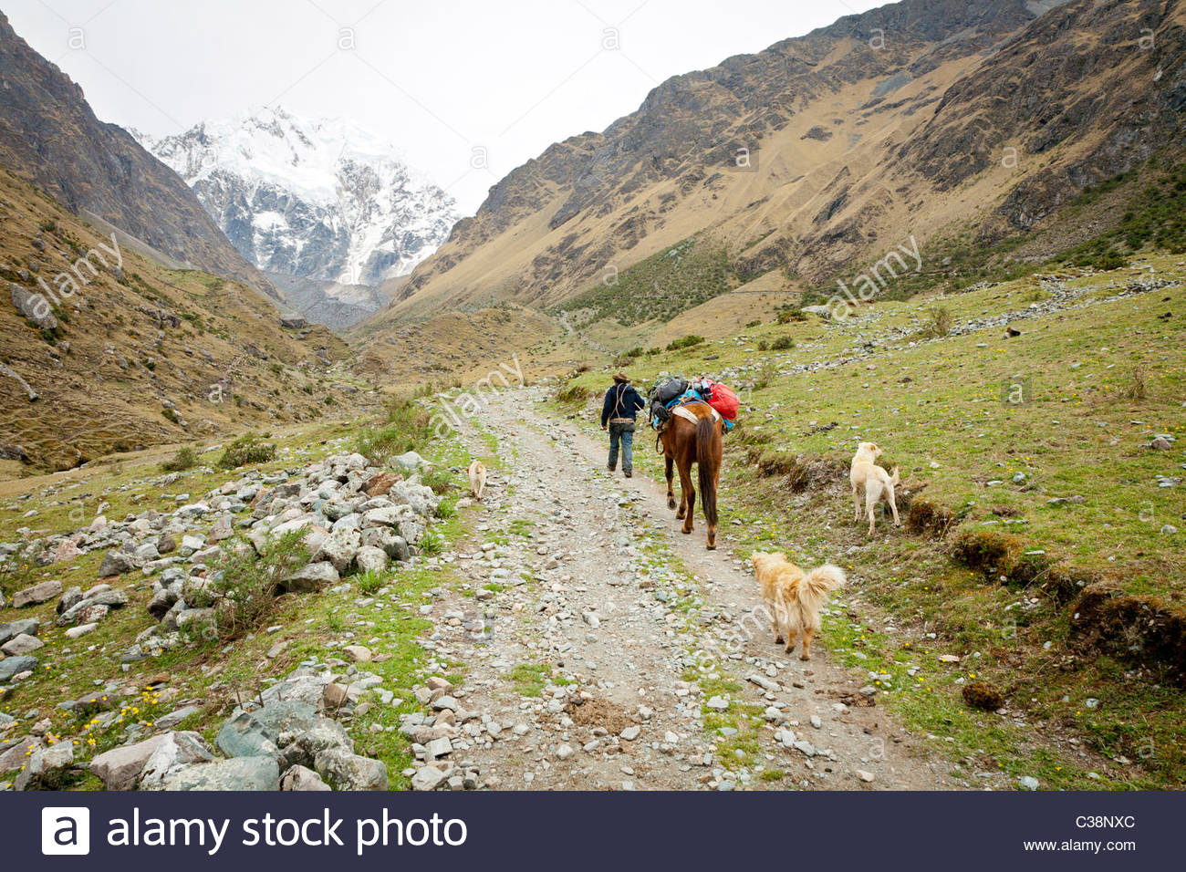 Peruvian man with pack-horse sets out from the base camp at Soray on the Salkantay Trail to Salkantay pass. Peru, Stock Photo