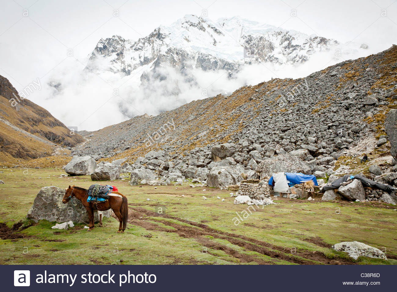 A pack-horse and a dog in front of Salkantay mountain just before the final ascent to Salkantay Pass, Peru. - Stock Image