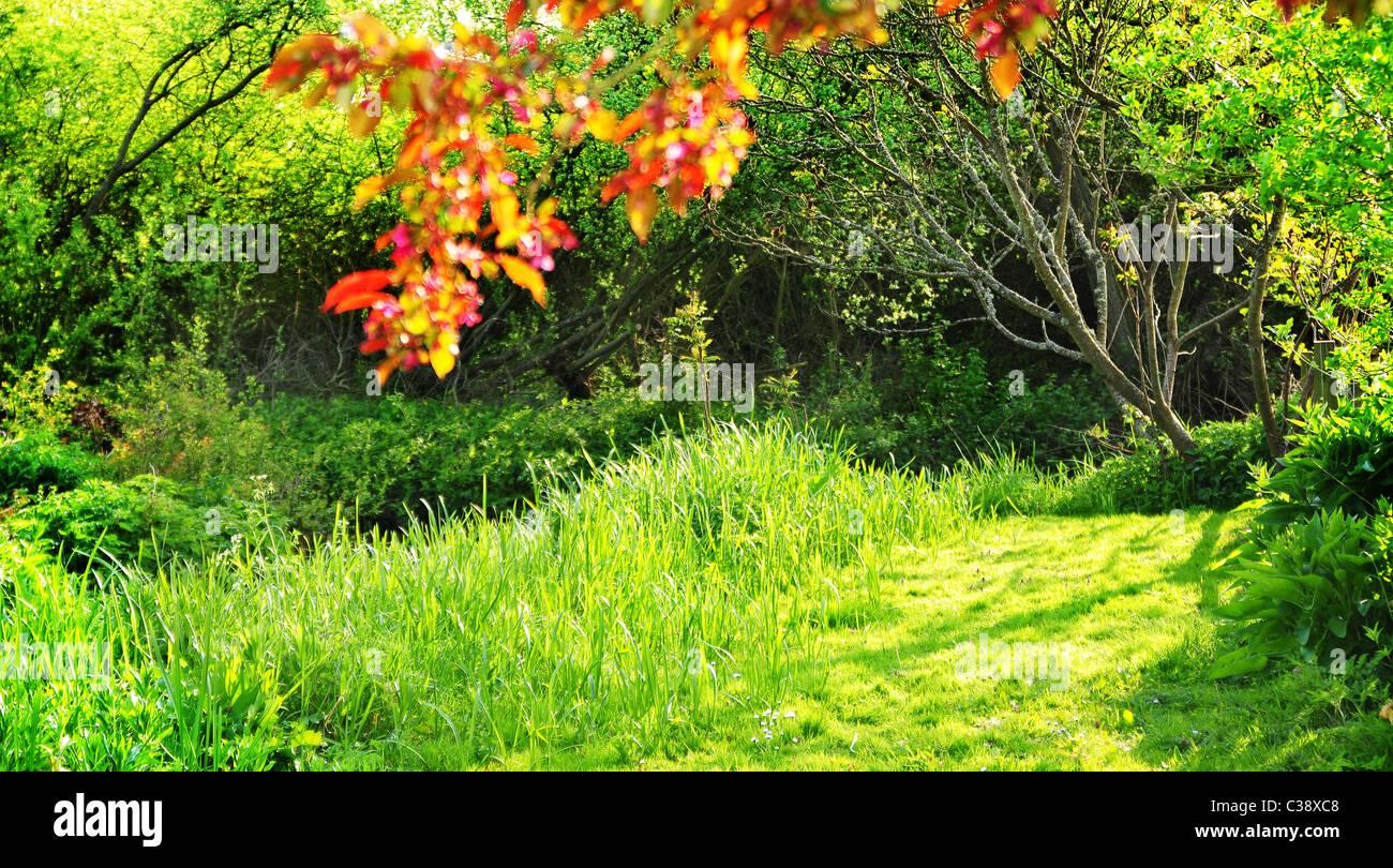 lush grass - Stock Image