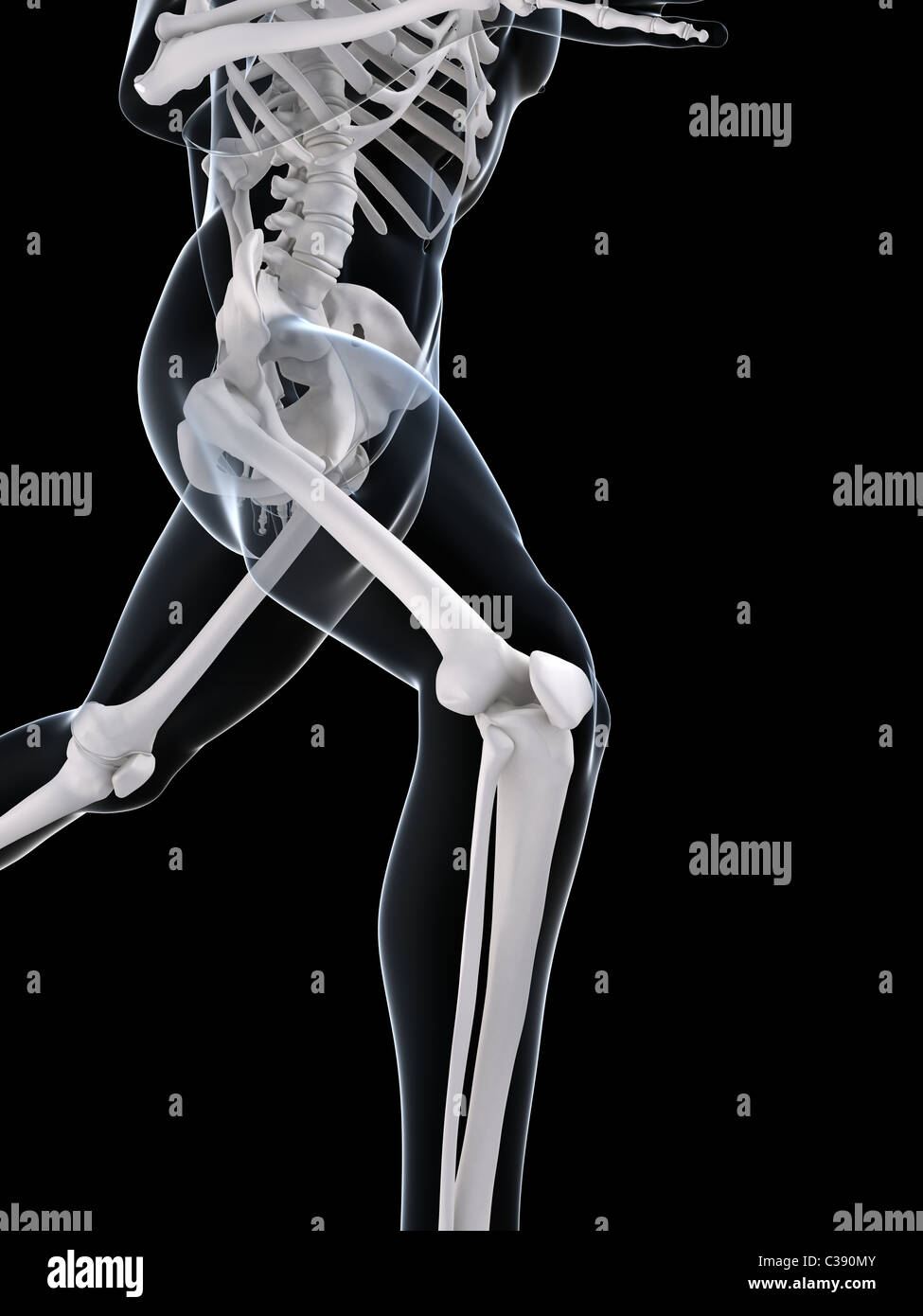 running skeleton Stock Photo
