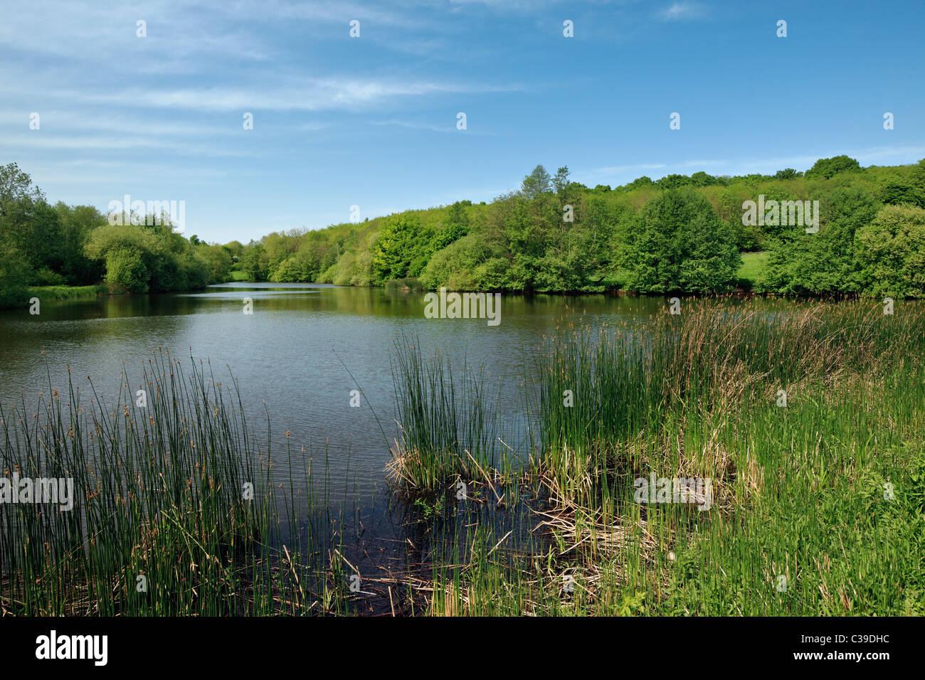 Picturesque lake near Tenterden, Kent. - Stock Image
