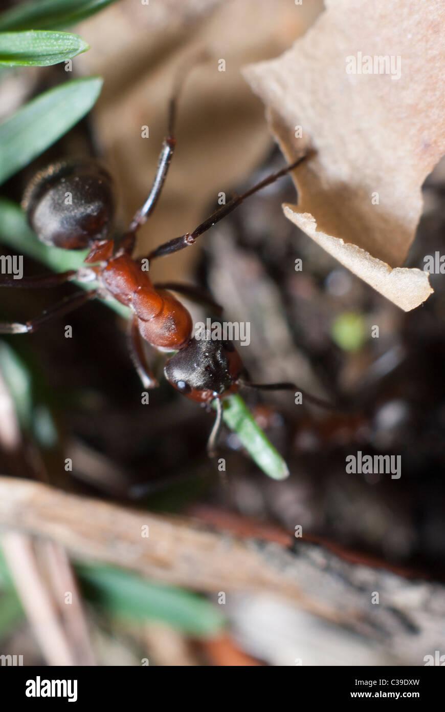 Ant's colony - Stock Image