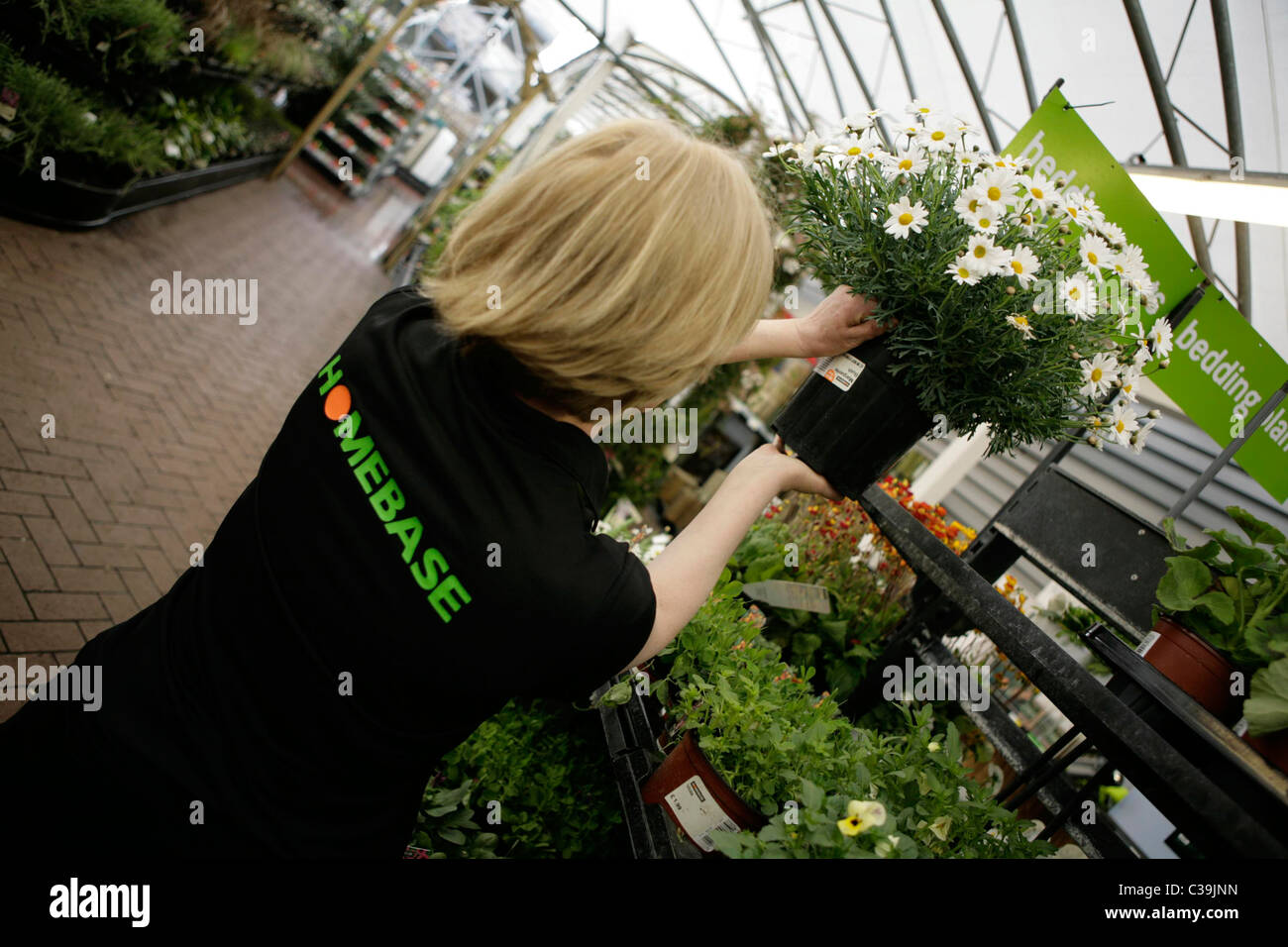 A Homebase employee at work in the gardening deparment of a store. - Stock Image