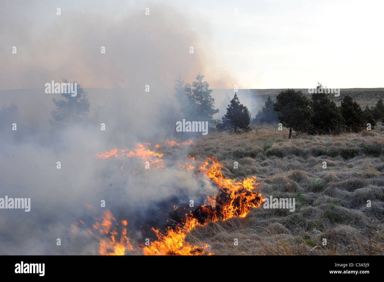 Grass fire over the moors and spreading into the trees dry windy weather assisting the spread of fire. - Stock Image
