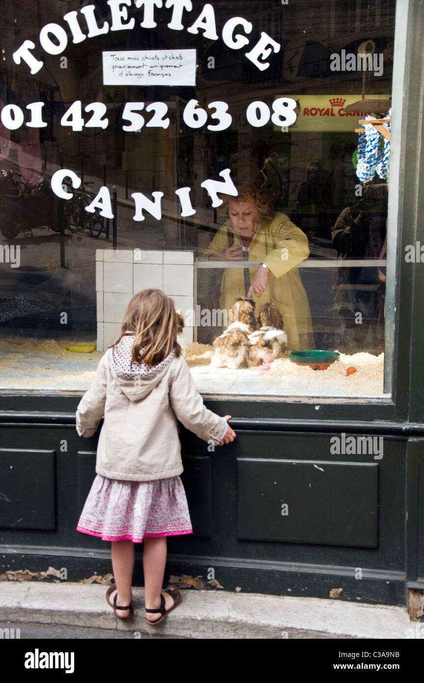 Pet shop with dogs in window girl child watches - Stock Image