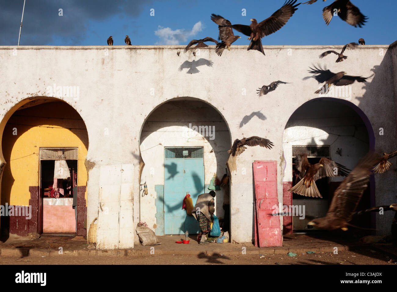 Black kites at the Harar meat market in Eastern Ethiopia. The wildbirds gather around the butchering area and are - Stock Image