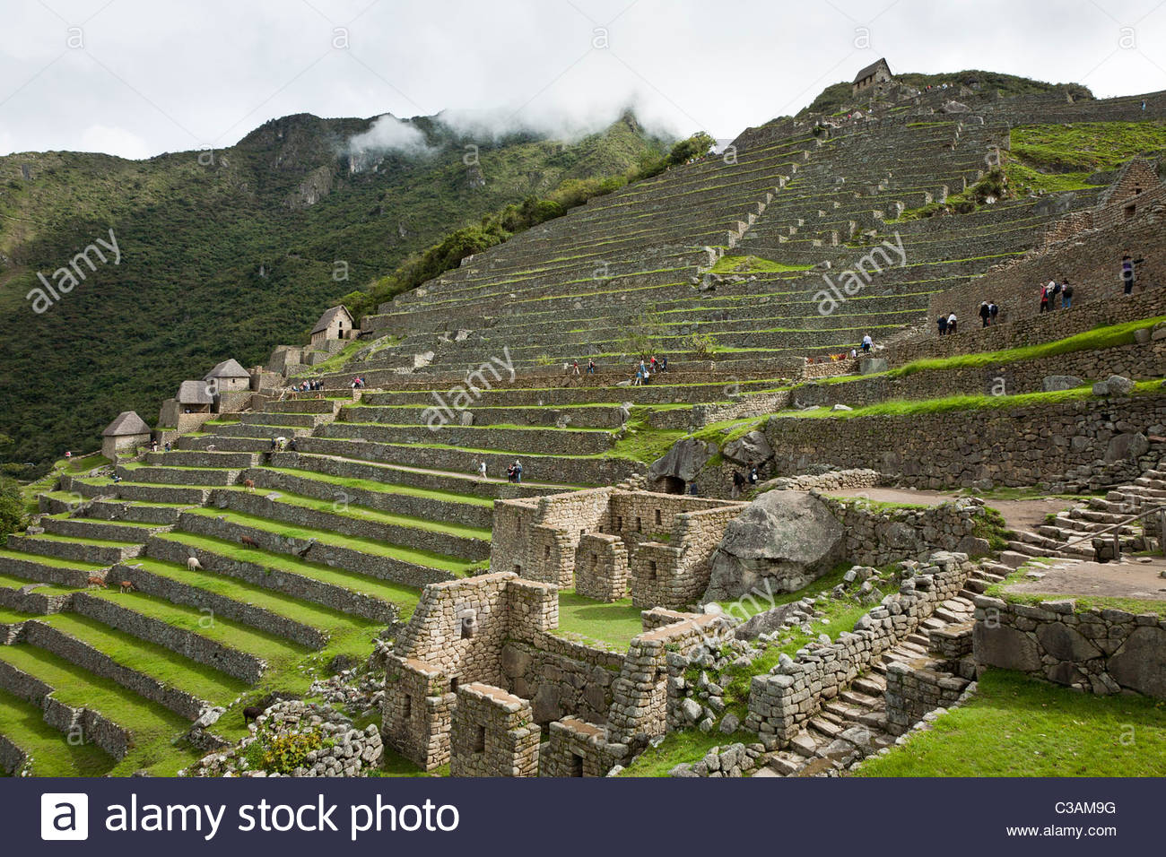 View of agricultural terraces in the western agricultural sector of the Machu Picchu complex. Stock Photo