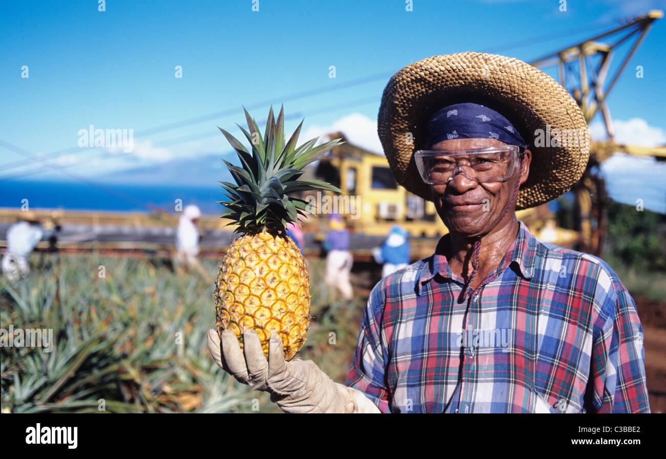 Pineapple Plantation Worker High Resolution Stock ...