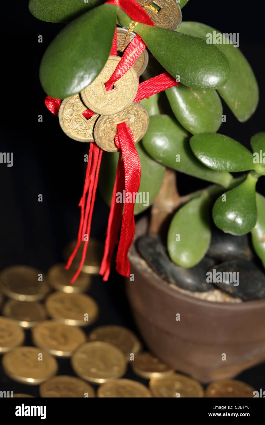 Closeup on Feng Shui COins on Money Tree with Gold Coins