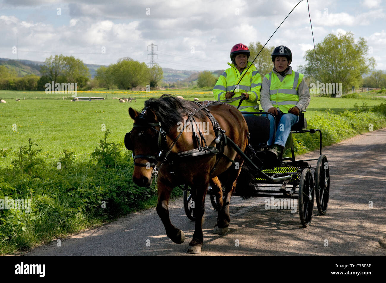 Pony and trap taken near Godney on the Somerset Levels, Somerset, England, uk - Stock Image