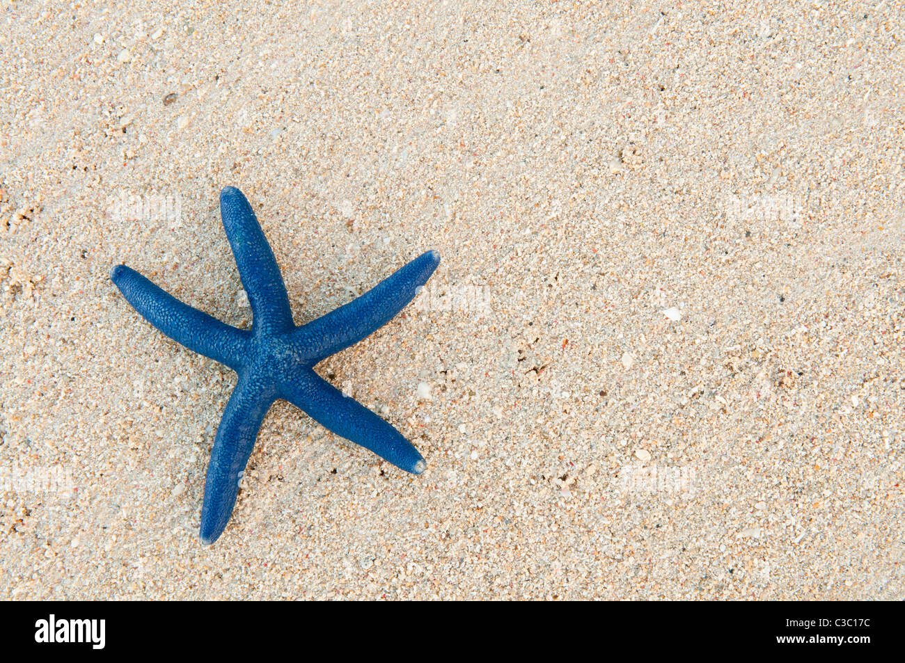 Blue sea star on sandy beach at Shangri-La Resort, Viti Levu Island, Fiji. - Stock Image