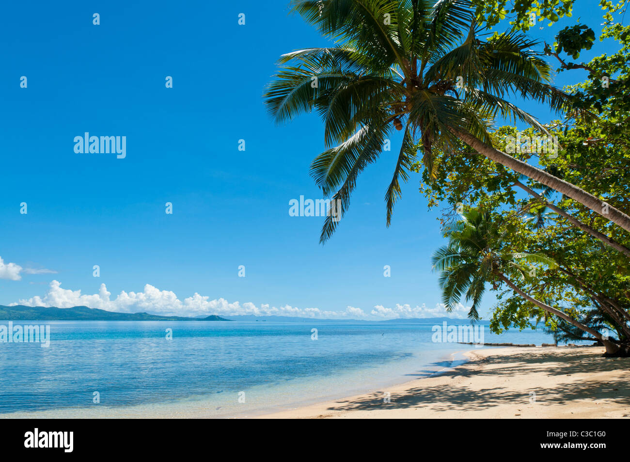 Beach and cocopalm trees at Matangi Private Island Resort, Fiji. - Stock Image