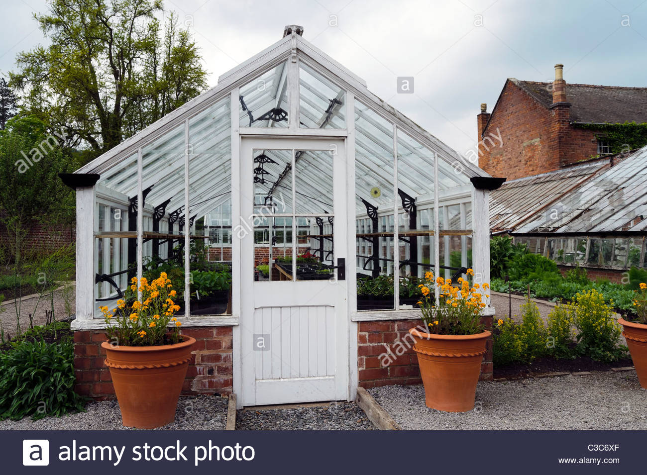 Old wooden greenhouse built on brick base, UK. Victorian glasshouse painted white. - Stock Image