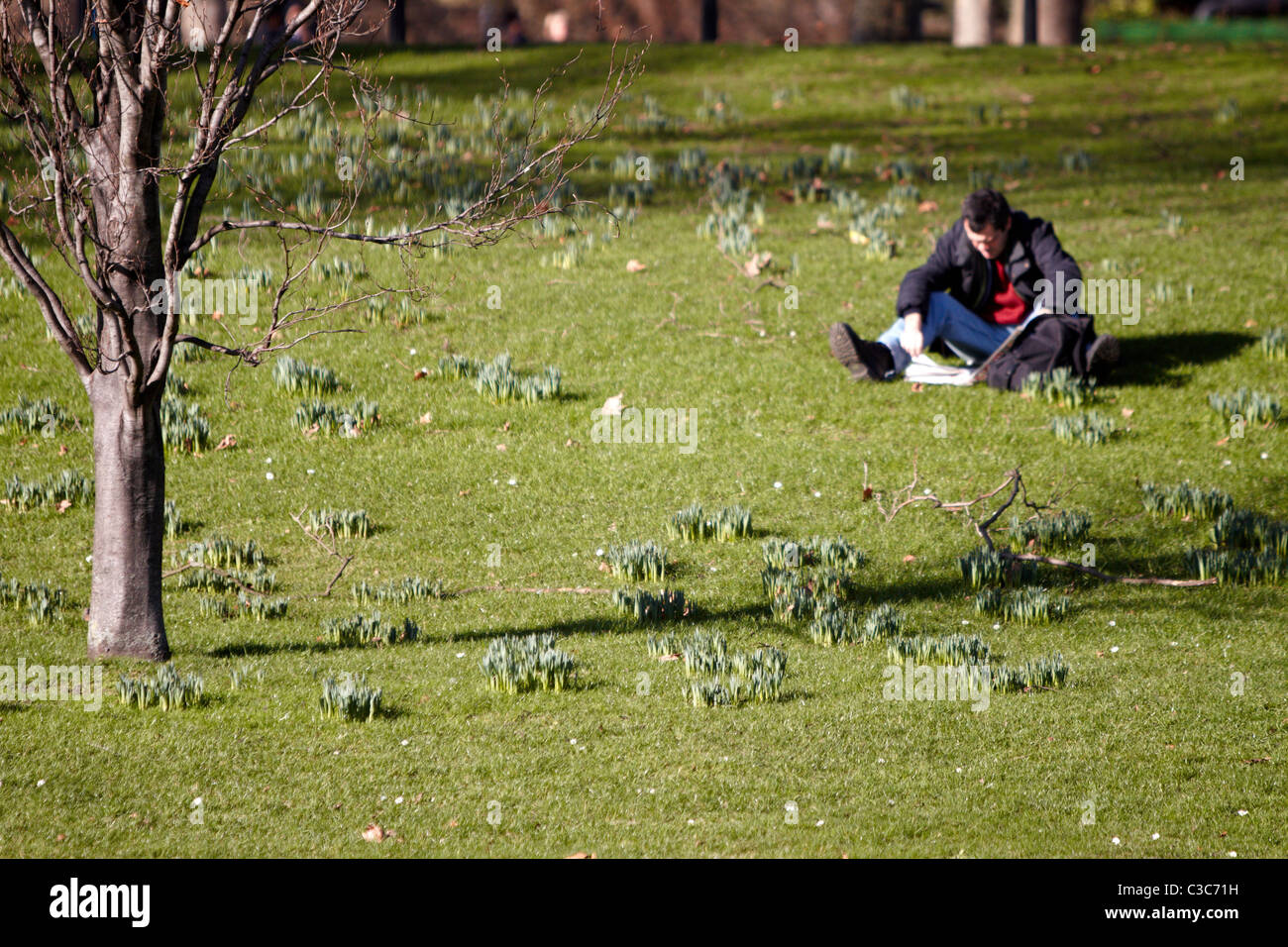 Man reads in Green Park London during unseasonal warm February weather - Stock Image