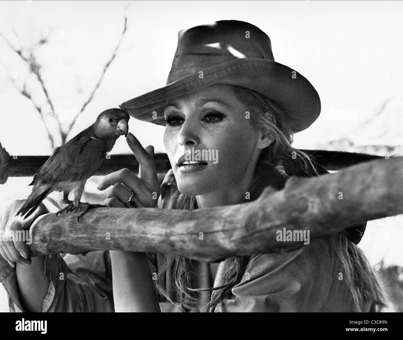 URSULA ANDRESS THE SOUTHERN STAR (1969) - Stock Image