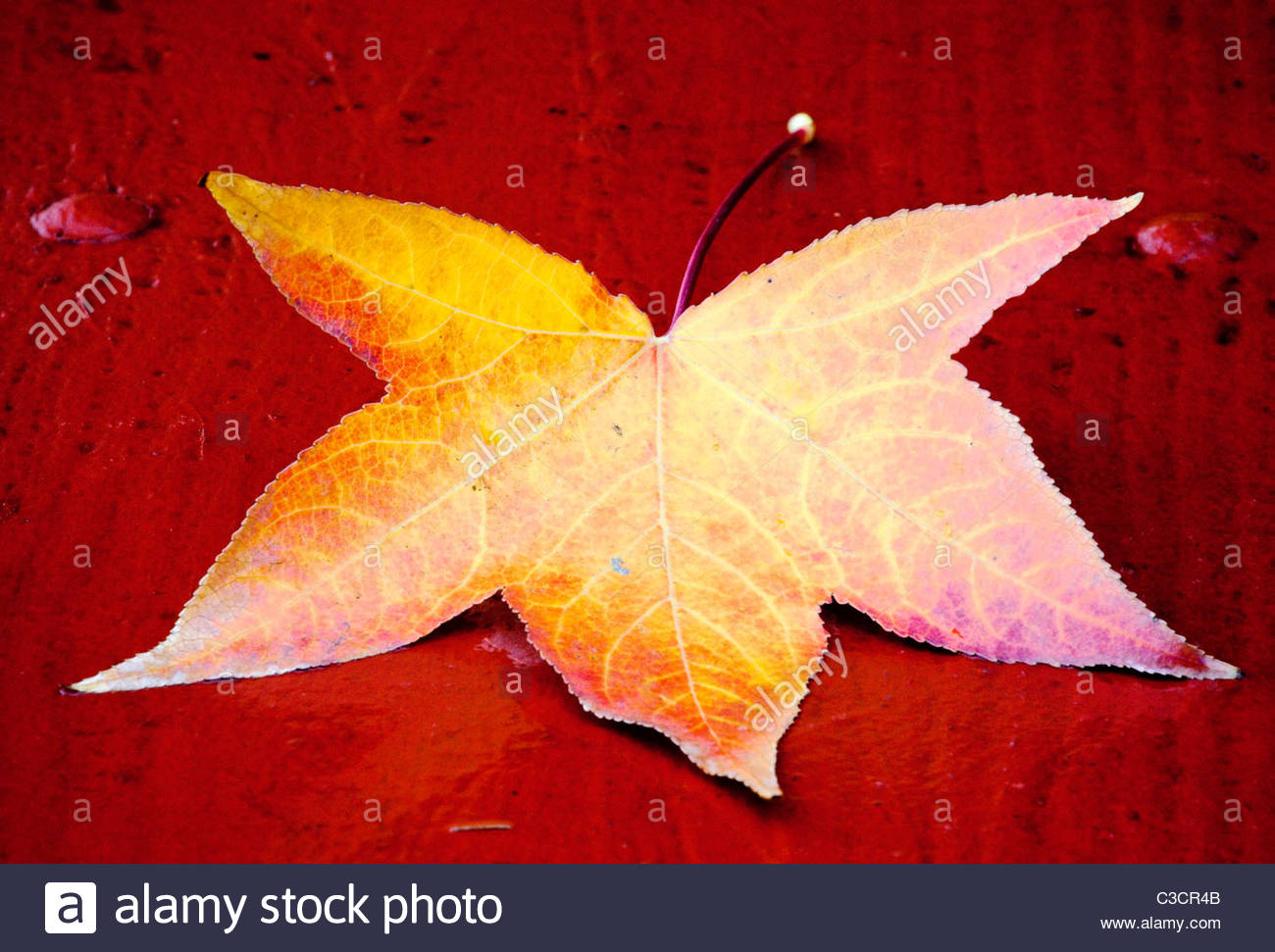 Autumn Leaf on Red Park Bench, Glendora, California - Stock Image