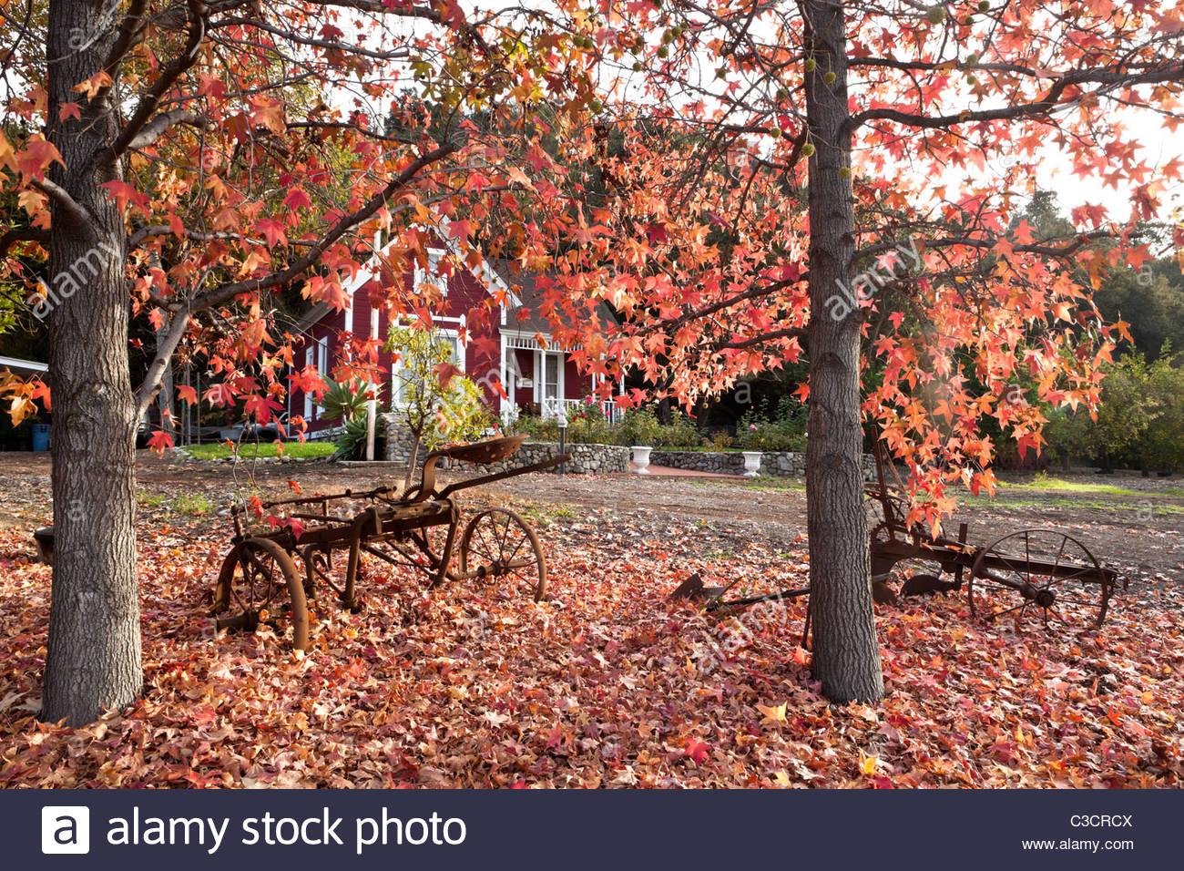 Hamilton House at Glendora Centennial Heritage Park During Peak Fall Foliage, Glendora, California Stock Photo