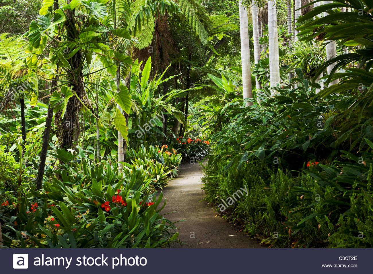 Jungle Garden at The Huntington, San Marino, California - Stock Image
