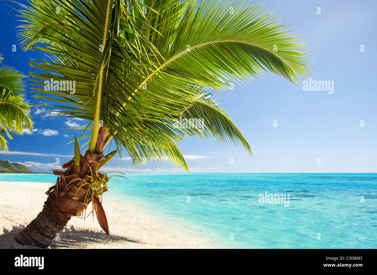 Small palm tree hanging over stunning blue lagoon - Stock Image