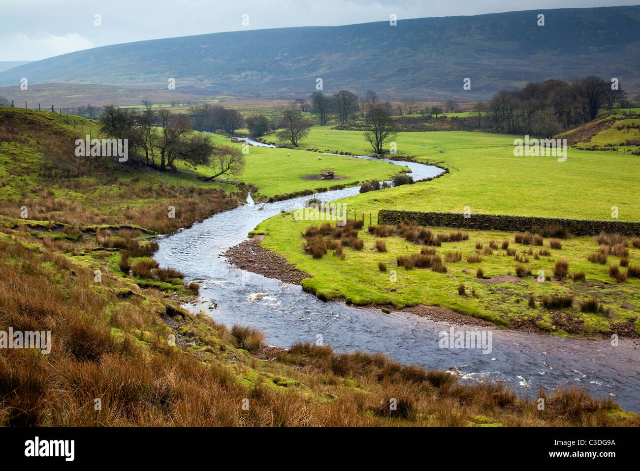 The River Wyre flowing through the Forest of Bowland, Lancashire - Stock Image