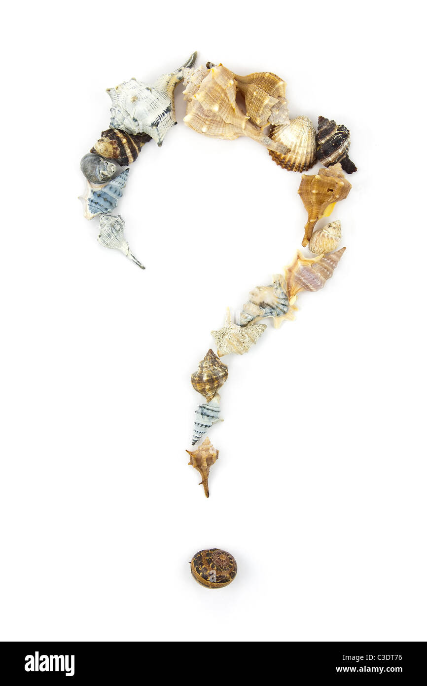 Question Mark made of Several Shells. Summer Theme - Stock Image