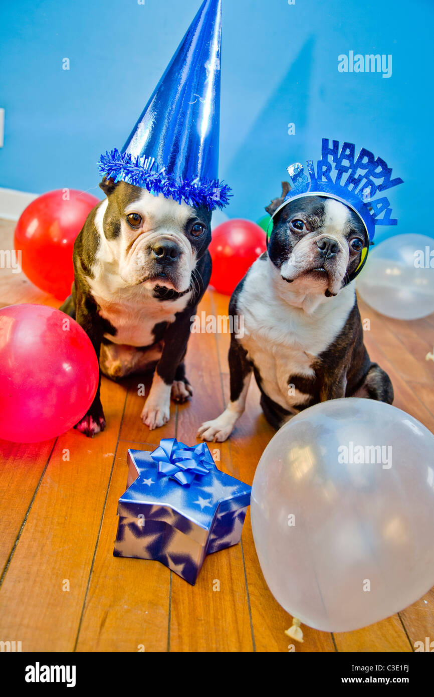 Dogs In Birthday Party Hats