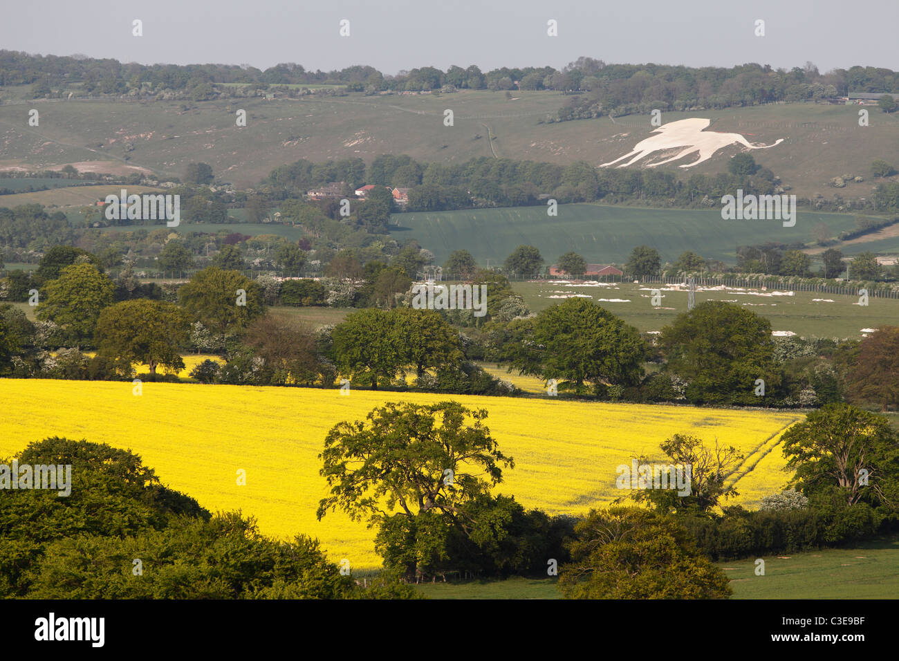 English landscape, Chilterns countryside, Buckinghamshire, 'Whipsnade Zoo' chalk lion in distance - Stock Image