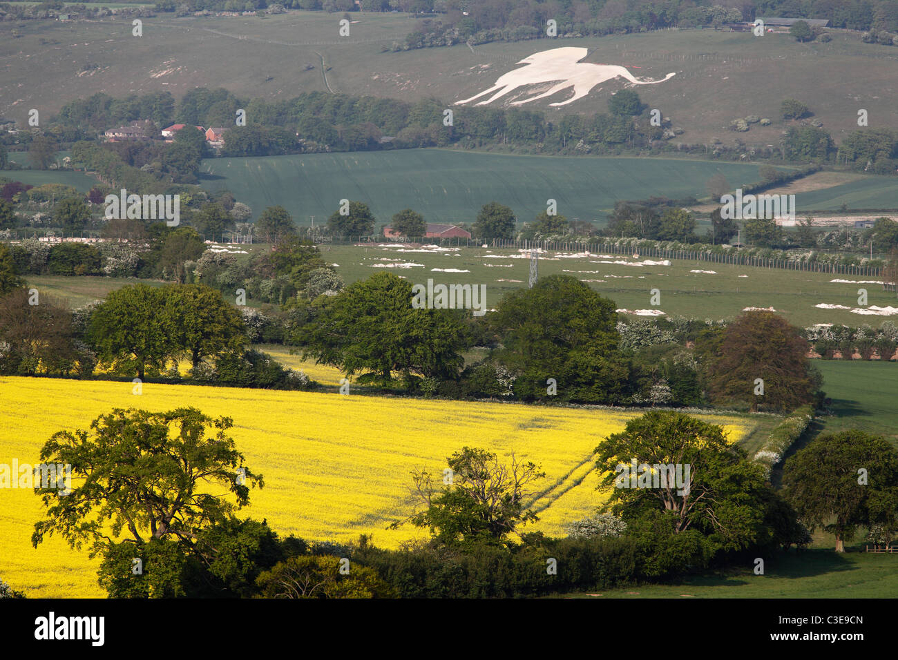Chilterns countryside, Buckinghamshire, 'Whipsnade Zoo' chalk lion in background - Stock Image