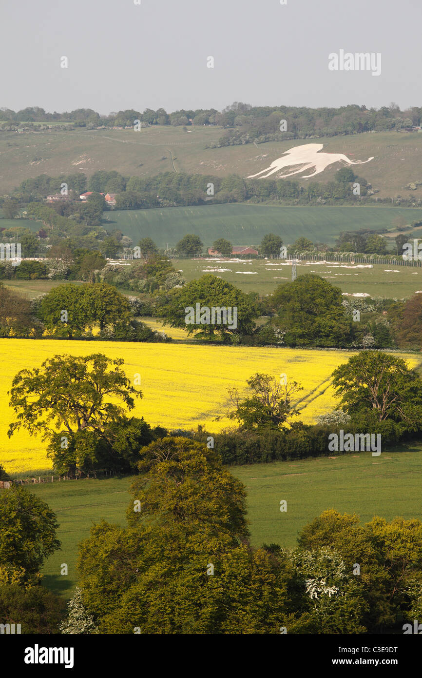 Chilterns English countryside, Buckinghamshire, 'Whipsnade Zoo' chalk lion in background - Stock Image