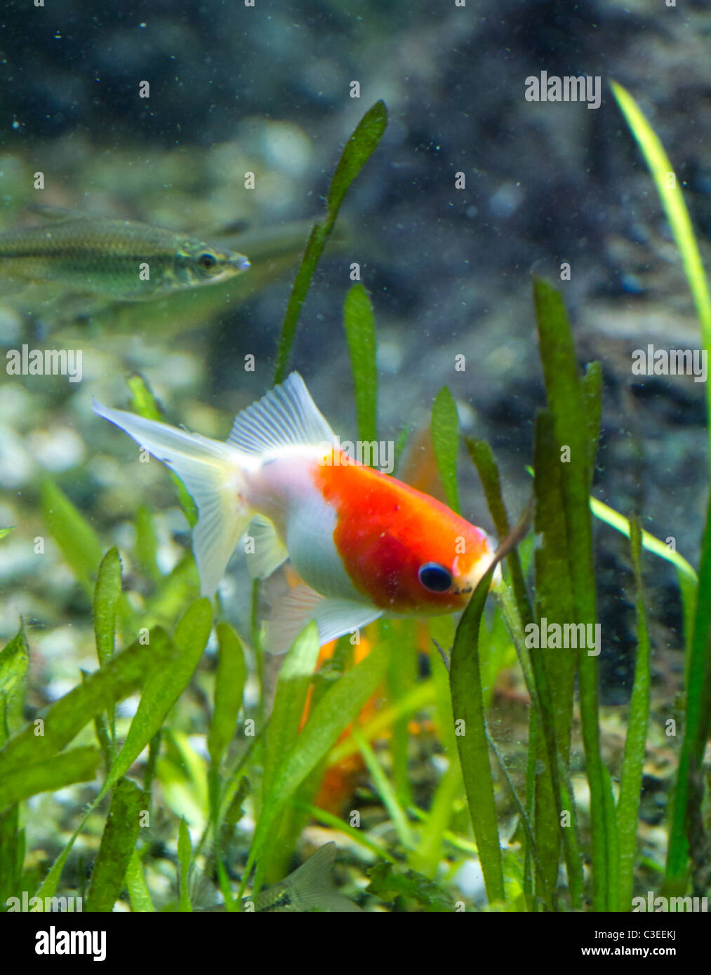Exotic Colored Fish Stock Photo: 36583558 - Alamy