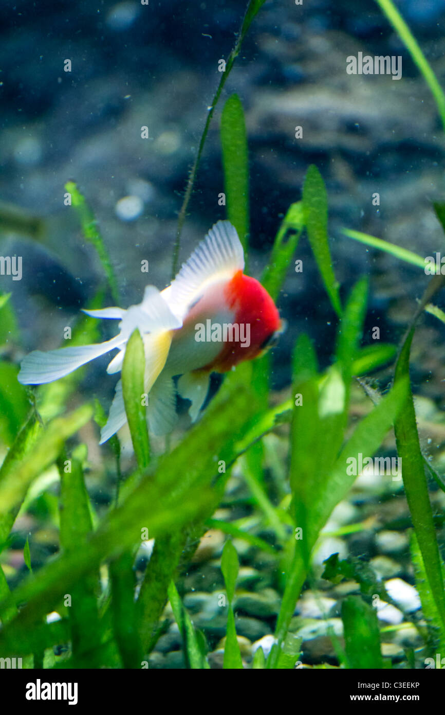 Exotic Colored Fish Stock Photo: 36583562 - Alamy