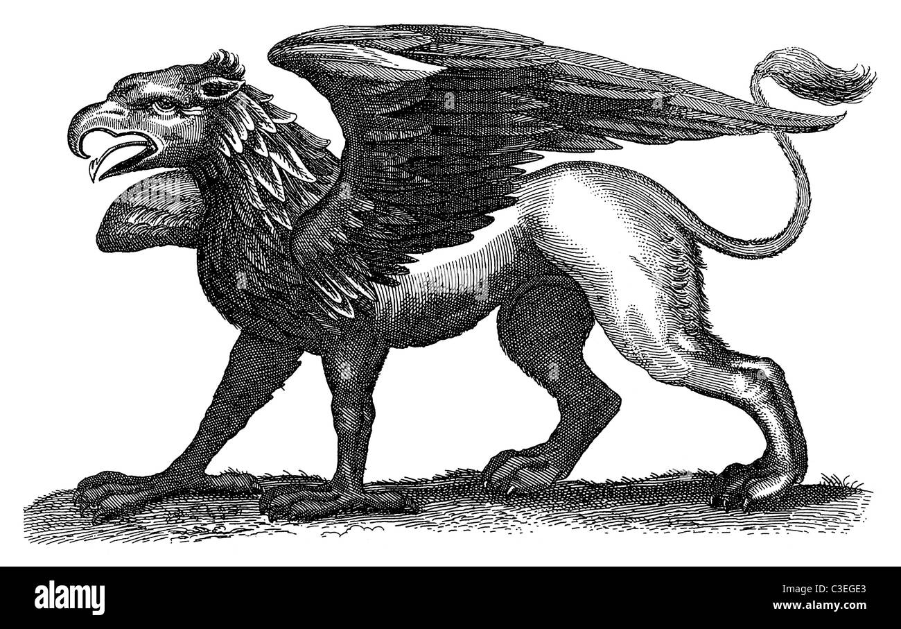 Gryphon, or Griffin, a mythical creature part bird, part lion, part nonsense. From a 1678 book of natural history - Stock Image
