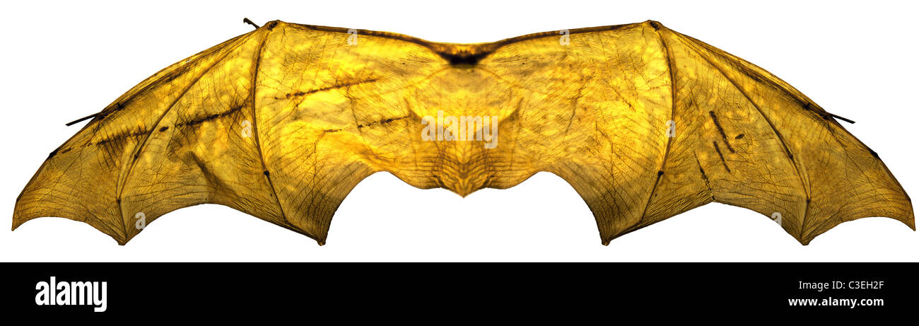 Processed image of glowing batwings - Stock Image