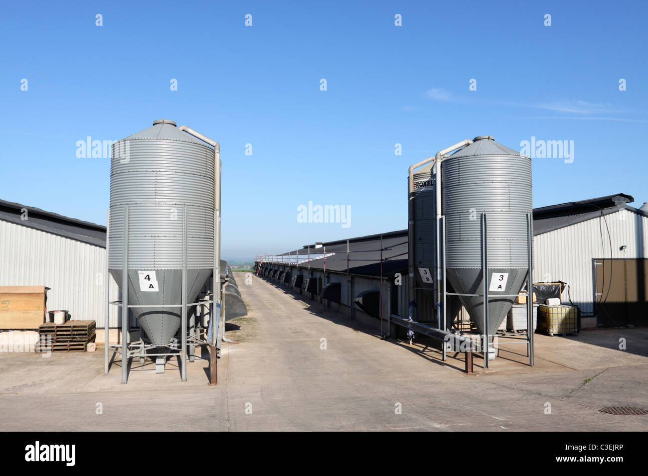 Feed silos outside broiler chicken sheds at a poultry farm in Shropshire, UK. - Stock Image