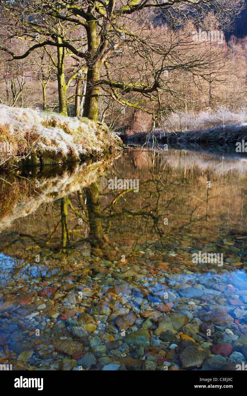 Frost-covered trees reflected in the still waters of the River Derwent in winter near Rosthwaite in the Lake District Stock Photo