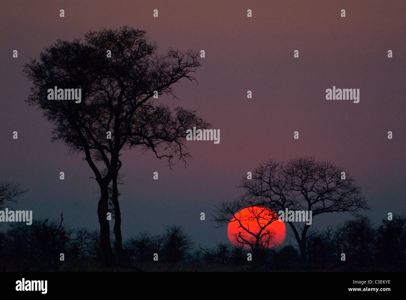 South African landscapes include desert, grassland, Bushveld and mountains. Red sun in smoky Kruger park, tree silhouette - Stock Image