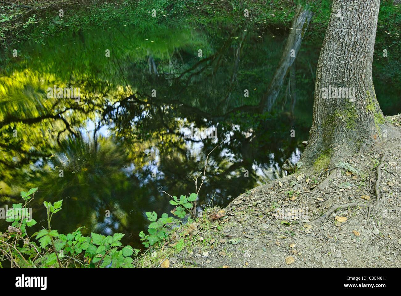Fern pond at Garland Ranch Park, Monterey, CA. - Stock Image
