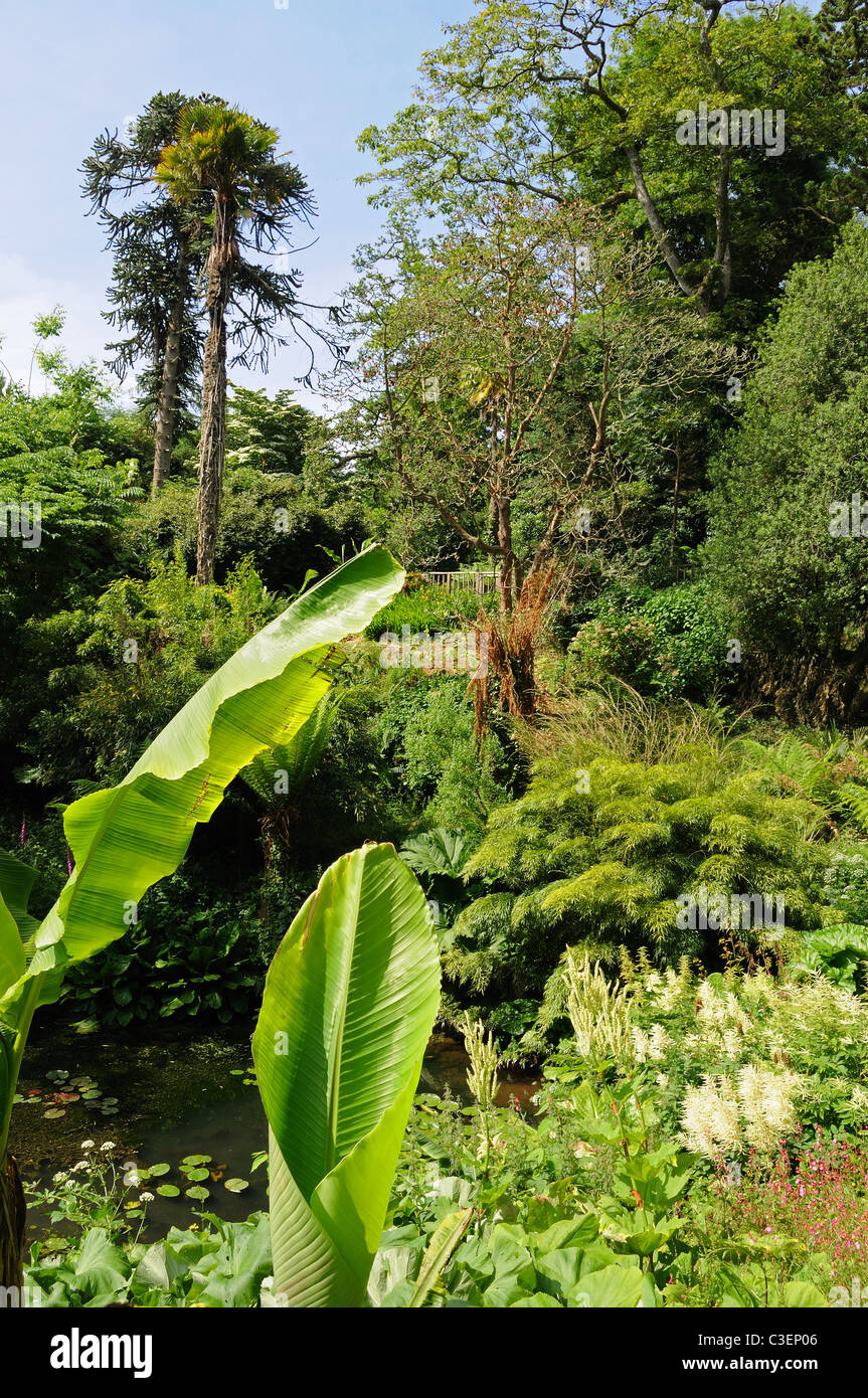 The jungle area in the Lost gardens of Heligan, Cornwall, UK - Stock Image